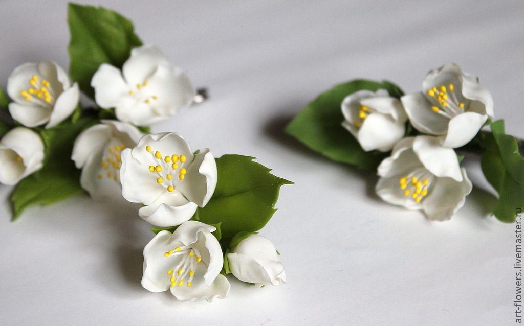 белые цветы жасмина