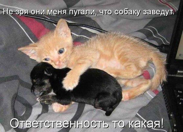 фото самых забавных котят