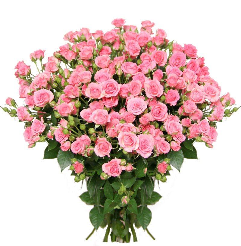 Фото розы букеты розовые