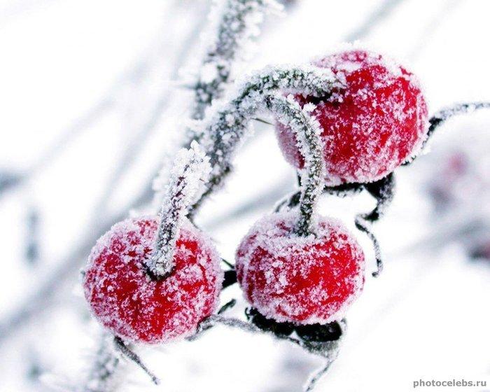 ягоды в снегу