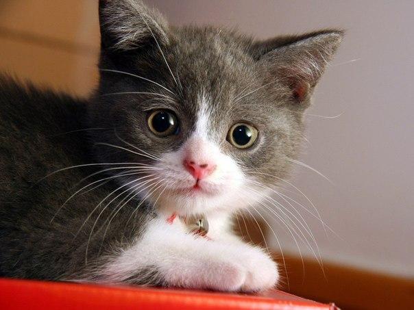 лучшие фото котят