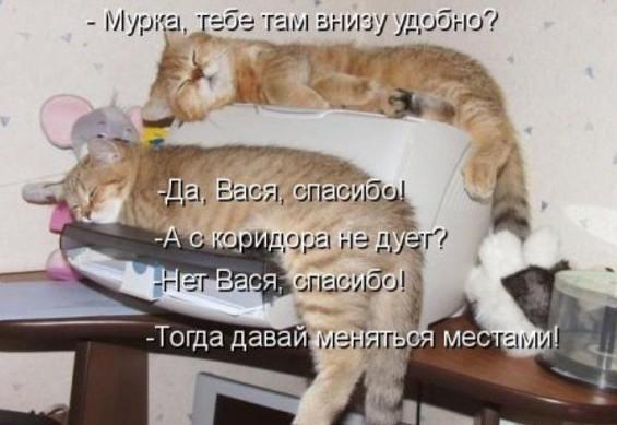 фото котят с подписями