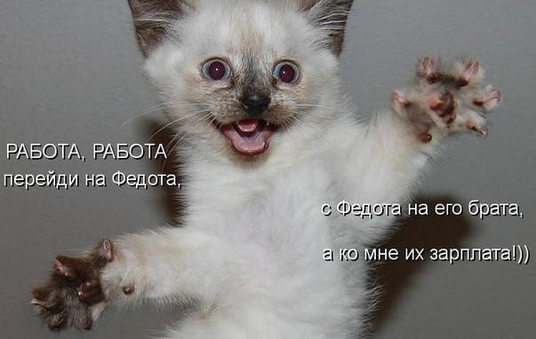 котята фото приколы