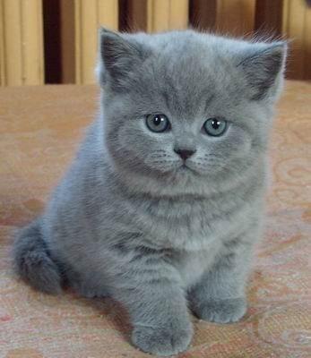 фото самых милых котят