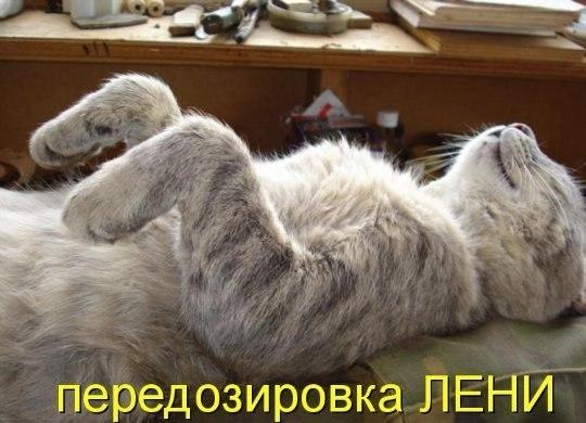 фото котят с подписями,