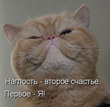 забавные котята фото с надписями