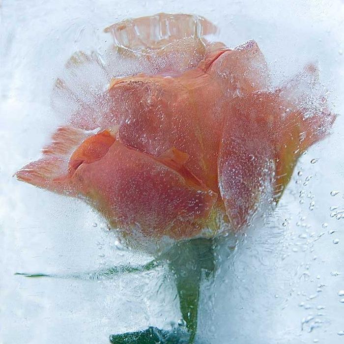 цветы ледяные скульптуры