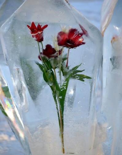 цветы во льду фото