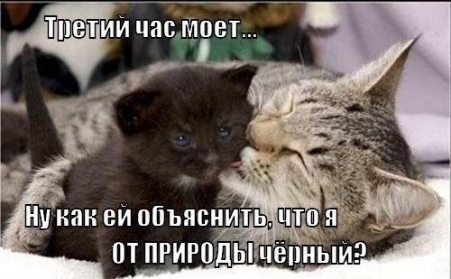 Смешные забавные коты фото 6