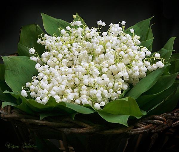 Вырывают цветы с корнями