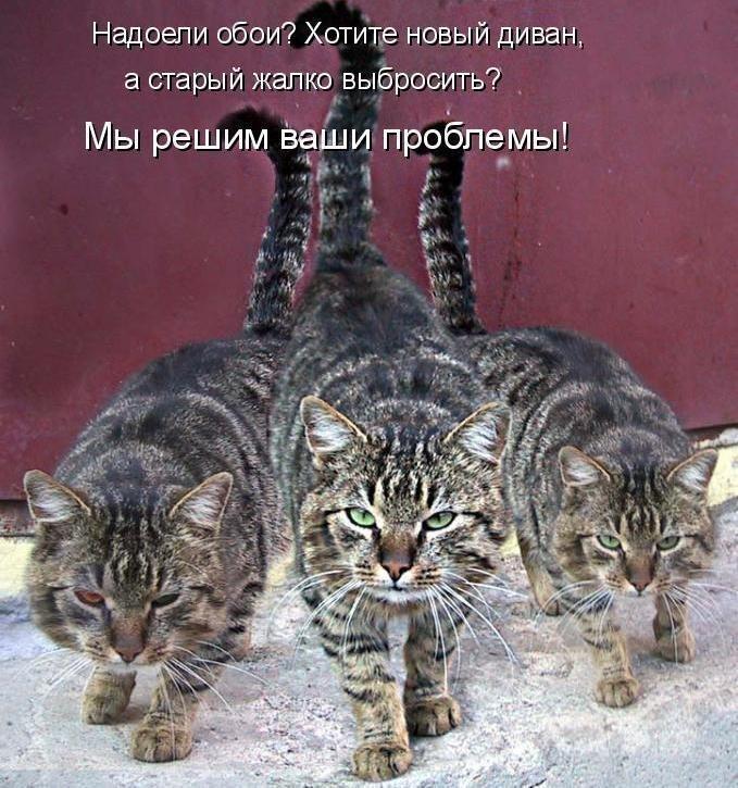 картинки со смешными котами