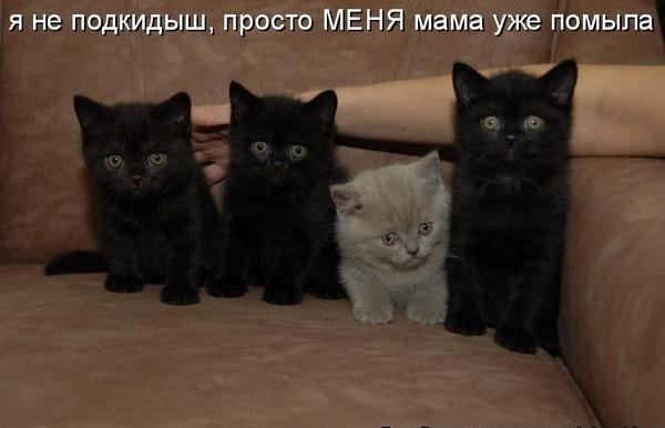 Забавные приколы с котятами