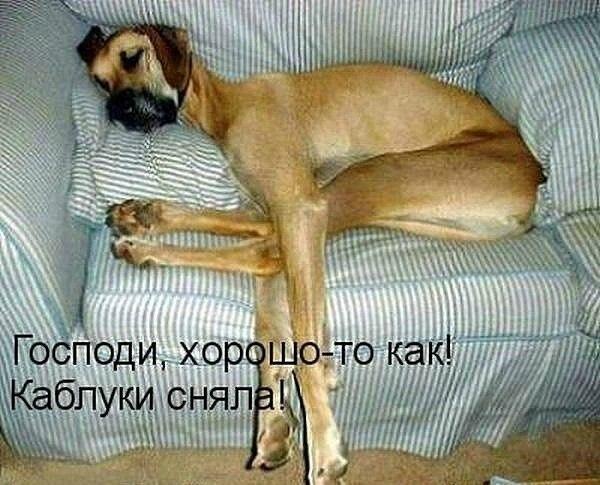 забавные картинки собак с надписями