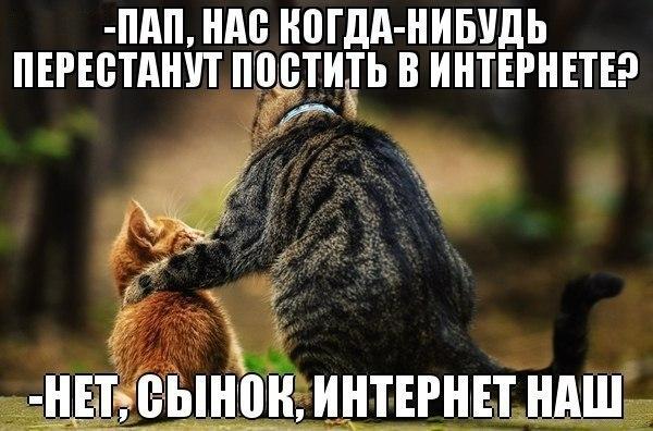 Кошки с приколами
