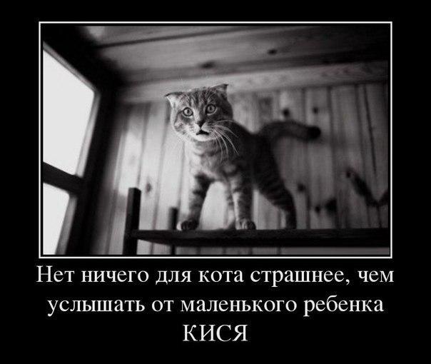 http://lisimnik.ru/wp-content/uploads/2013/03/BX7jRjuWm-4.jpg