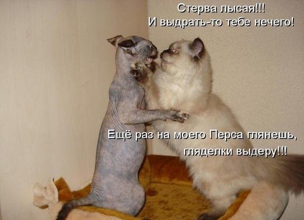 забавные кошки картинки