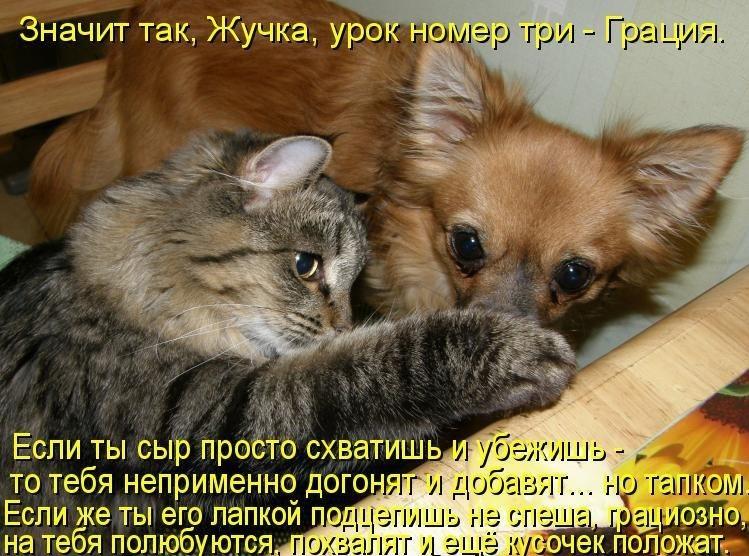 Забавные фото кошек и собак