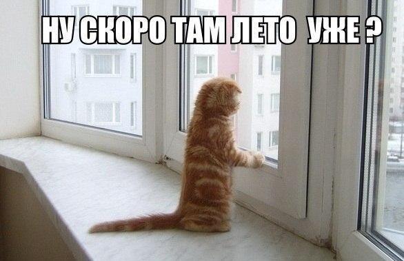 Смешные фотки котов с надписями 8