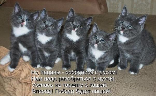 забавные фото котят