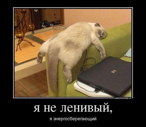 http://lisimnik.ru/wp-content/uploads/2013/03/RC_pUaHyh2w.jpg