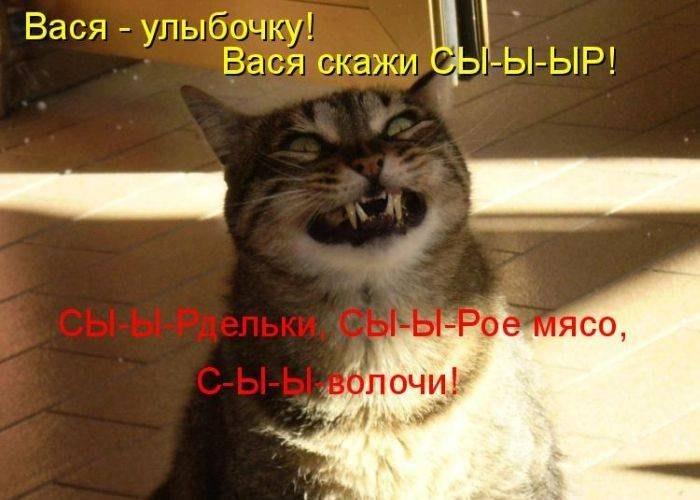 смешные забавные коты фото