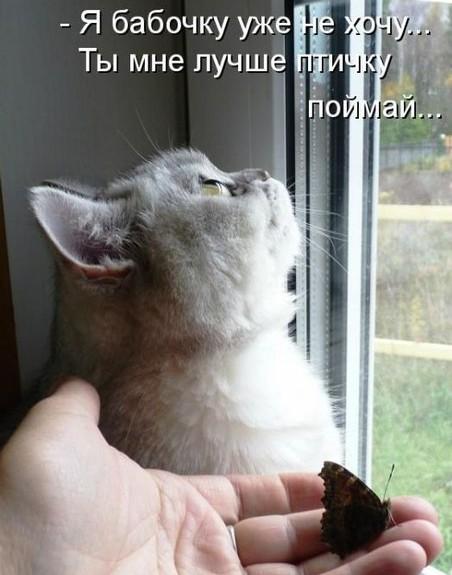 фото забавных котят