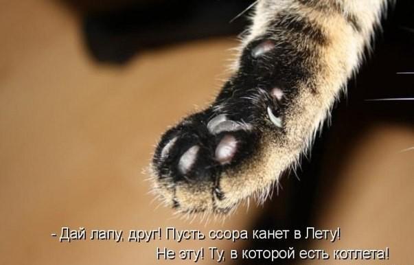 картинки со смешными котятами