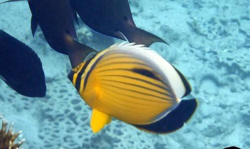 обитатели морского аквариума
