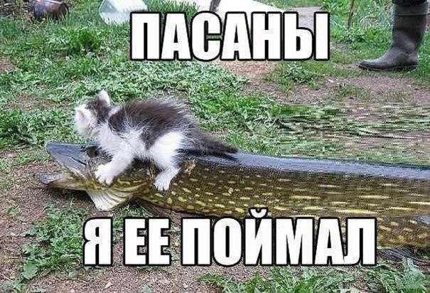 Картинки красивые с котятами