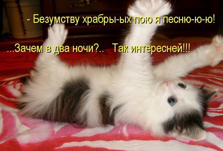самые смешные фото с котятами