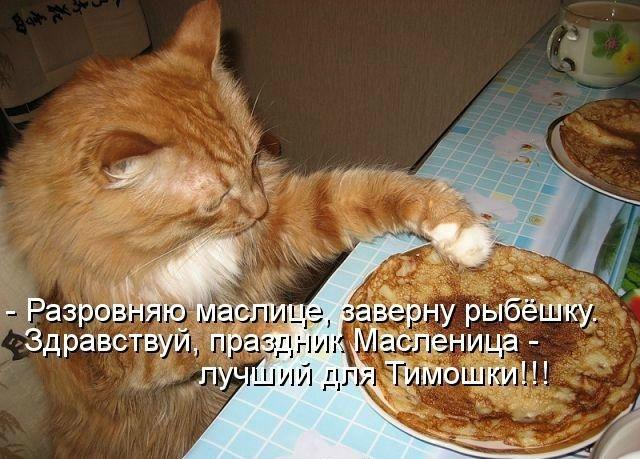 у кота масленица фото