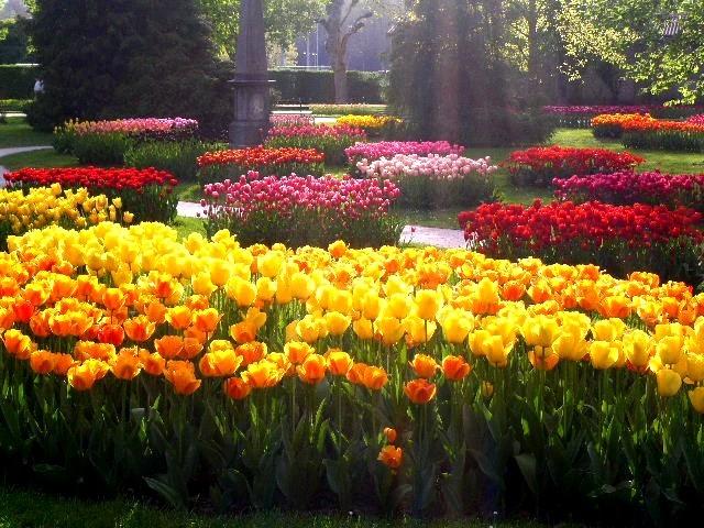 многолетние весенние цветы