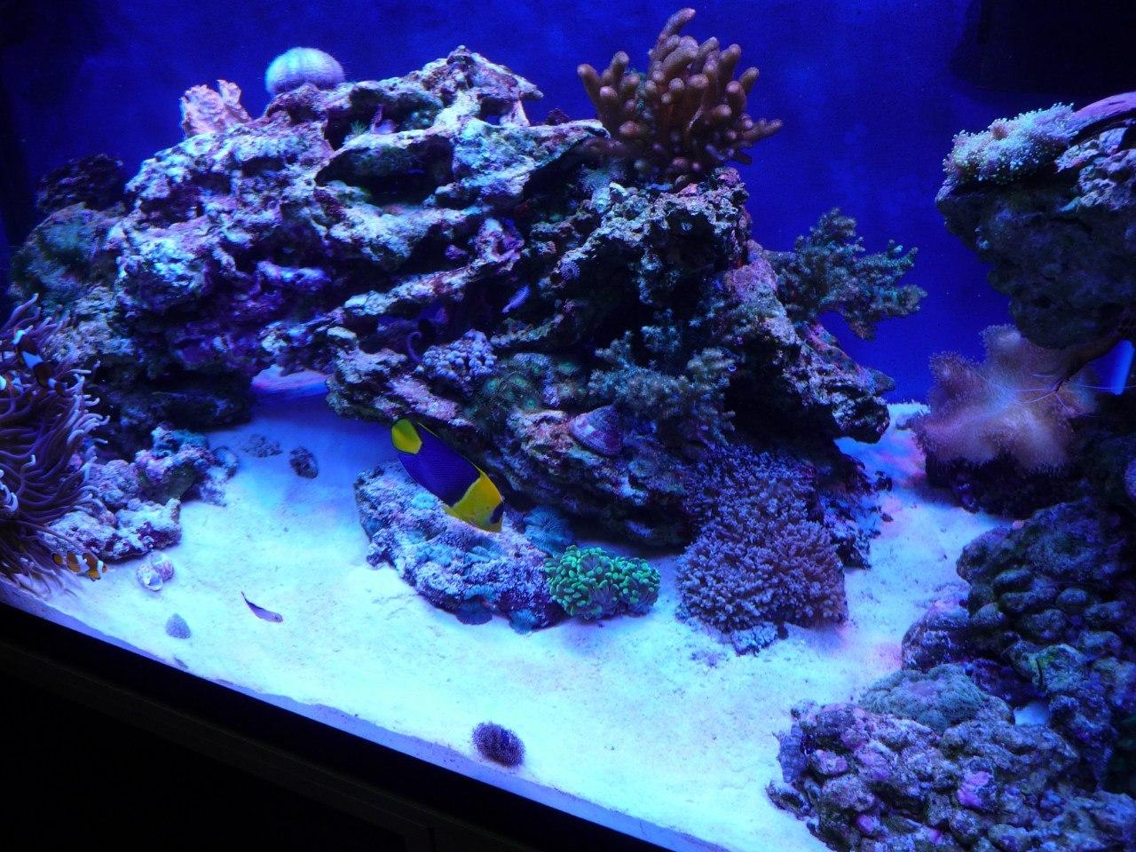 домашний морской аквариум фото