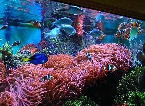оформление морского аквариума фото
