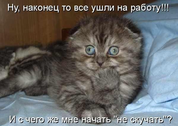 самые смешные фото котят