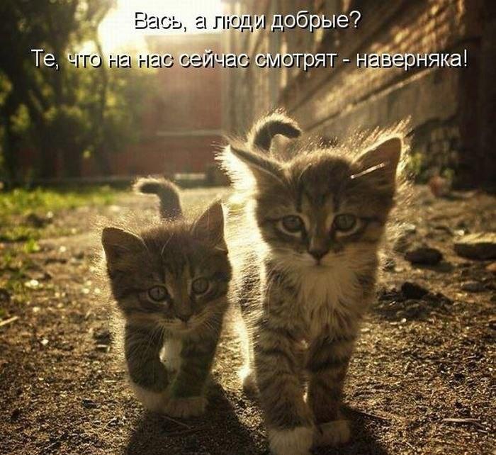 смешные фото с котятами