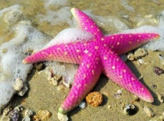 самое медленное морское существо