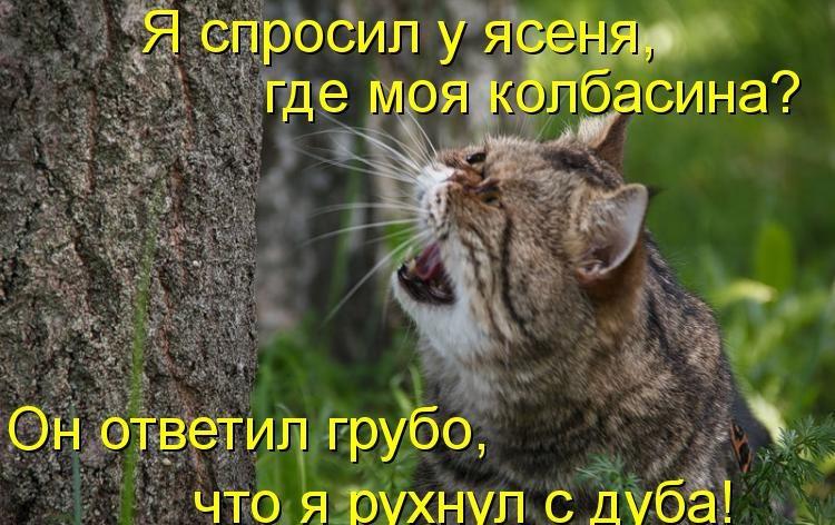 Прикольные фото с кошками с надписями и без