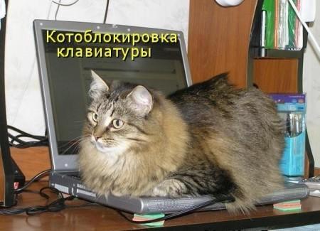 демонтиваторы с котами и кошками