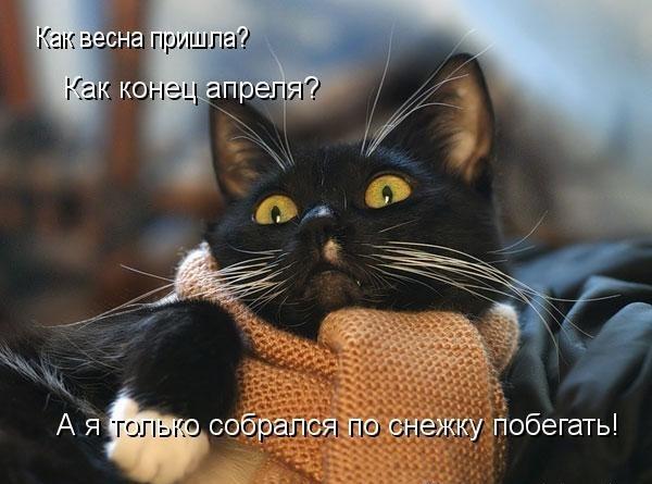 самые забавные картинки с котами