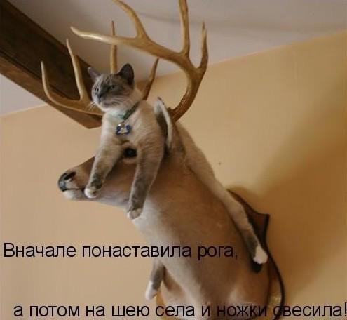 забавные картинки с котами