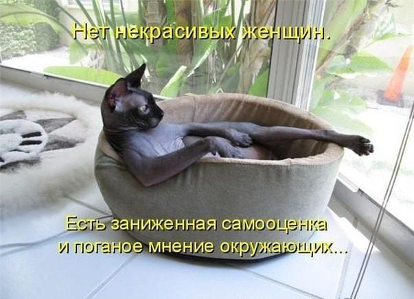 прикольные фото с котами и кошками