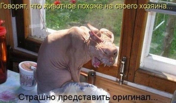 необычные фото котов и кошек