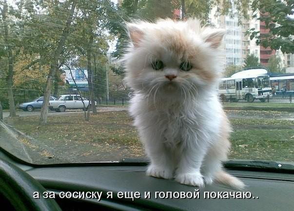 самые смешные котята