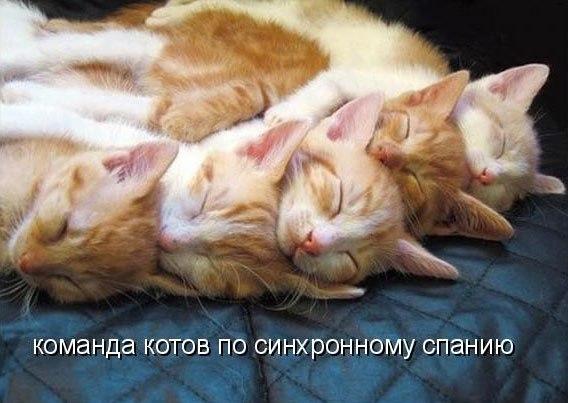 забавные фото котов и котят