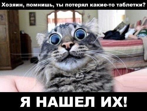 забавные фото котов