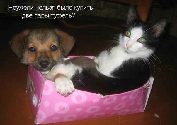 смешные фото с животными