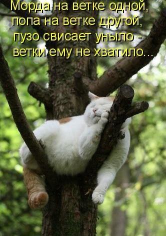 забавные фото котов и кошек