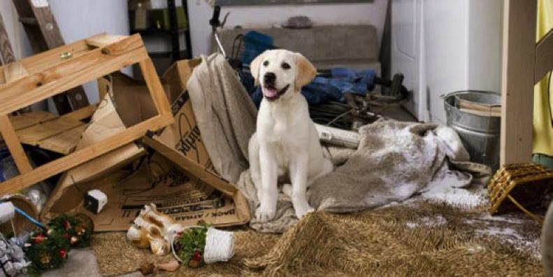интересные и смешные истории про собак