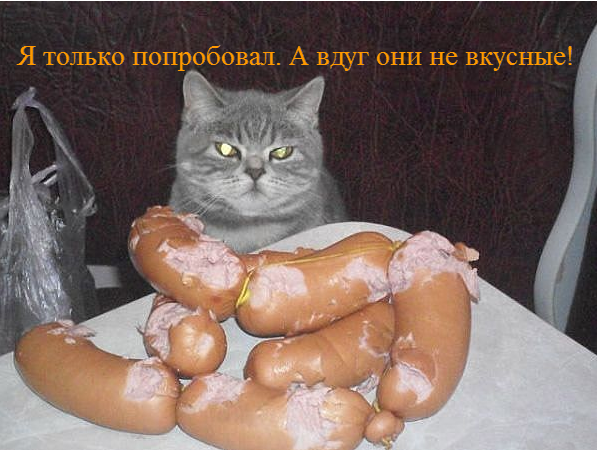 забавные фото кошек, демонтиваторы